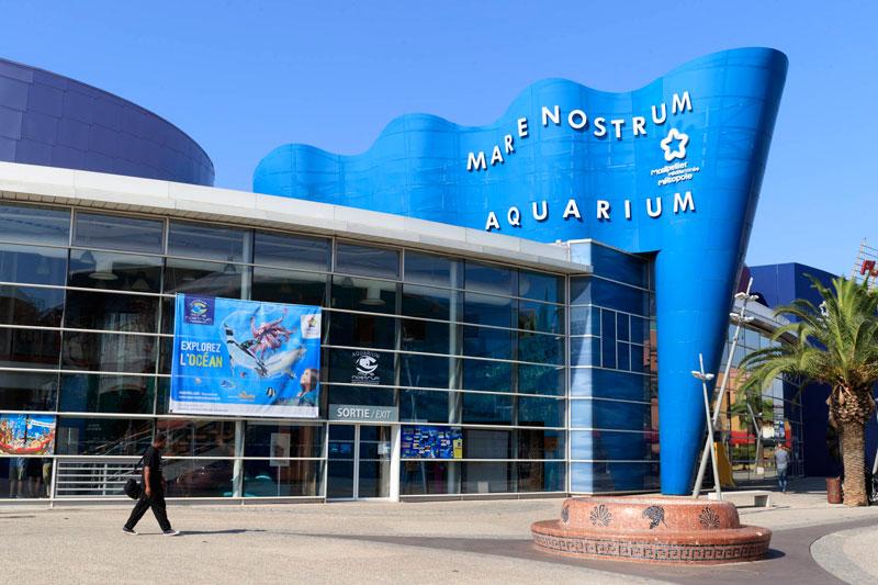 enfants guide loisirs aquarium mare nostrum