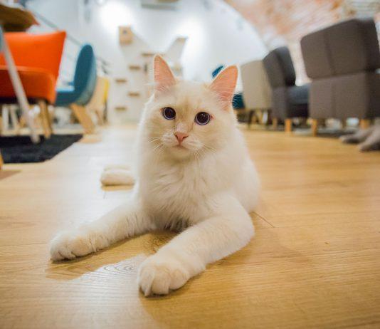 bar à chats à Toulouse