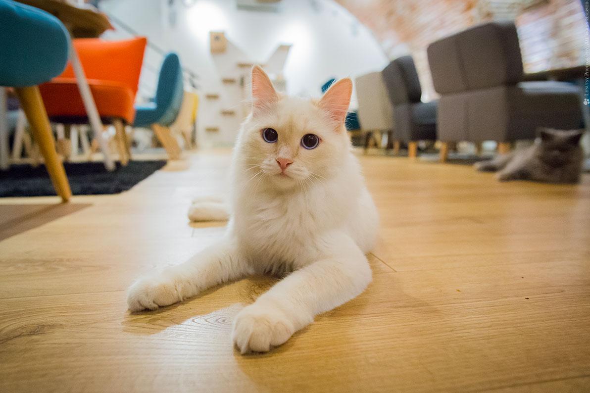 Essai gratuit datant chat