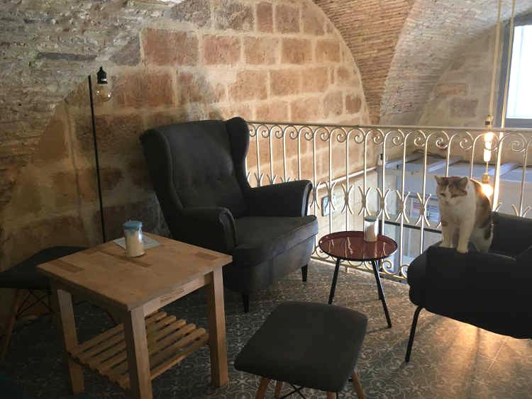 bar à chats à Montpellier