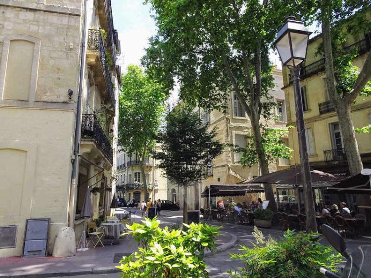 Écusson Montpellier Rue du Palais des Guilhem ©VeraIzrailit-Flickr